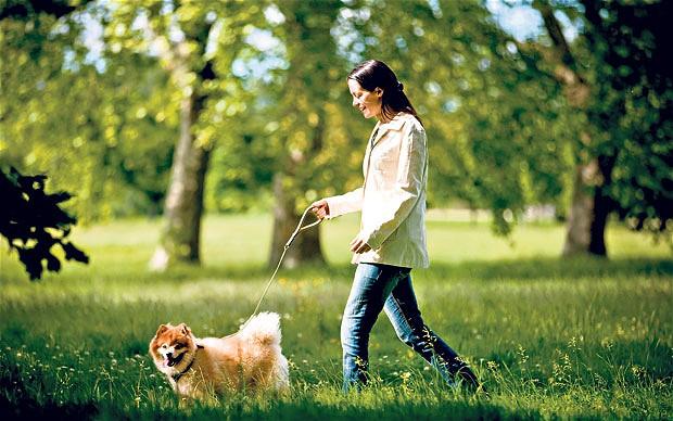 dogwalking_2492971b (1)