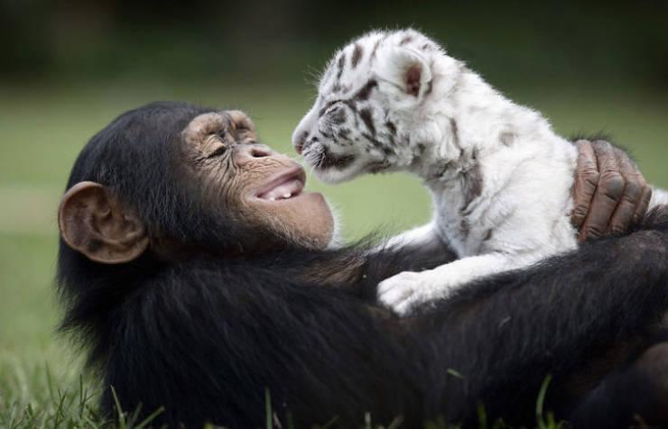 true_friendship_is_limitless_640_02