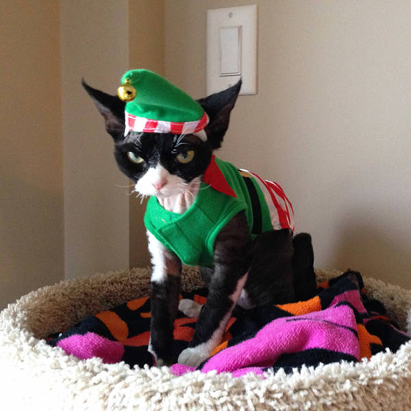 these_pets_are_fed_up_with_all_this_christmas_stuff_640_02