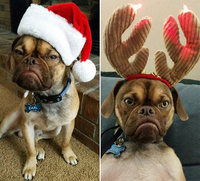 these_pets_are_fed_up_with_all_this_christmas_stuff_640_05