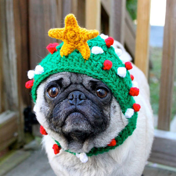 these_pets_are_fed_up_with_all_this_christmas_stuff_640_07