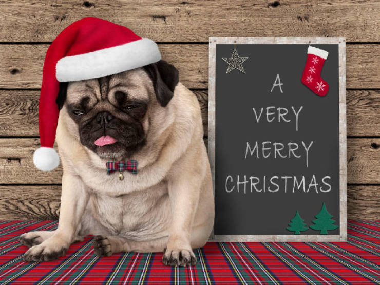 these_pets_are_fed_up_with_all_this_christmas_stuff_640_08