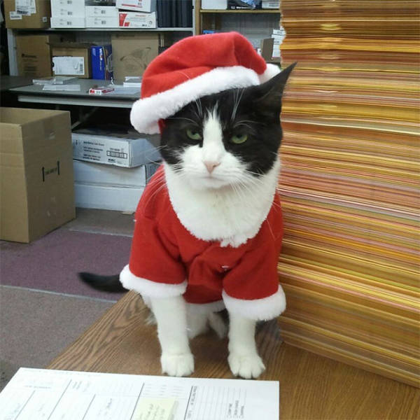 these_pets_are_fed_up_with_all_this_christmas_stuff_640_09