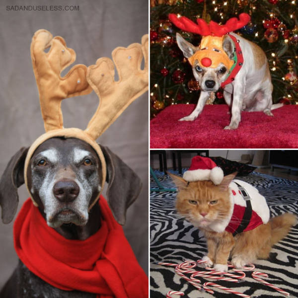 these_pets_are_fed_up_with_all_this_christmas_stuff_640_11