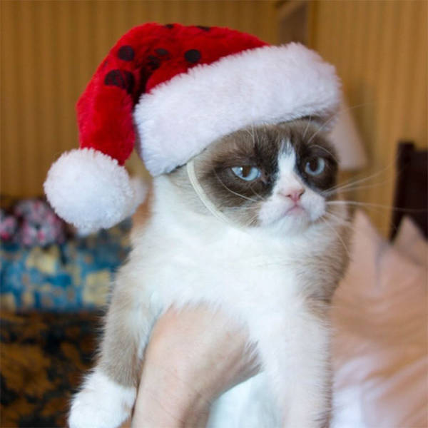 these_pets_are_fed_up_with_all_this_christmas_stuff_640_16