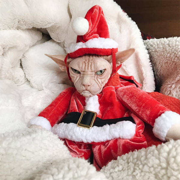 these_pets_are_fed_up_with_all_this_christmas_stuff_640_21