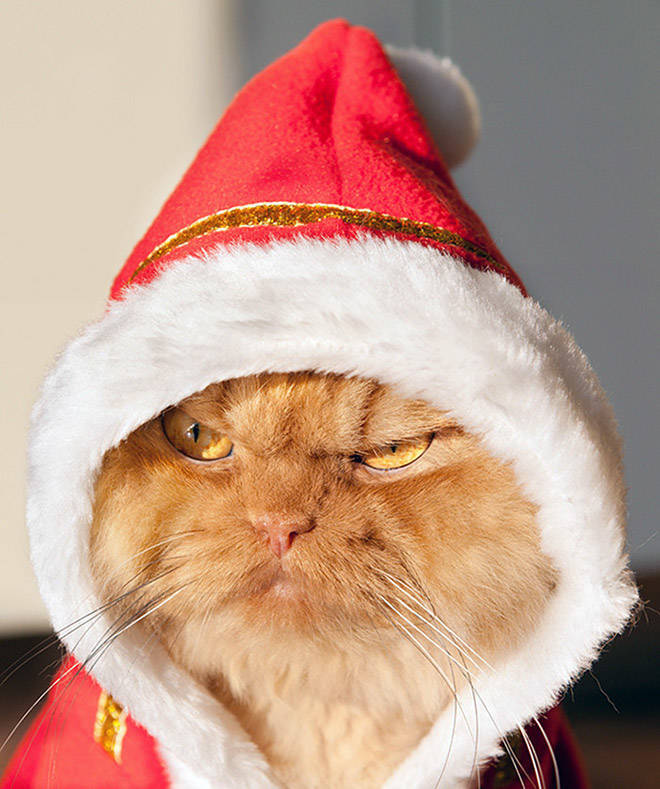 these_pets_are_fed_up_with_all_this_christmas_stuff_640_high_04