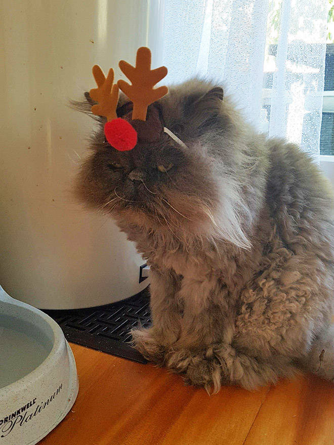 these_pets_are_fed_up_with_all_this_christmas_stuff_640_high_06