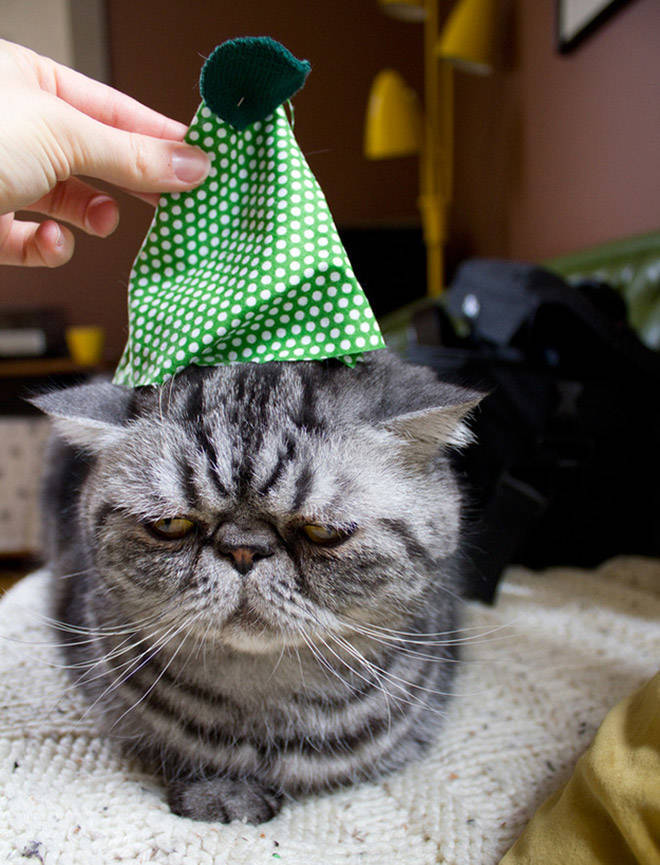 these_pets_are_fed_up_with_all_this_christmas_stuff_640_high_12