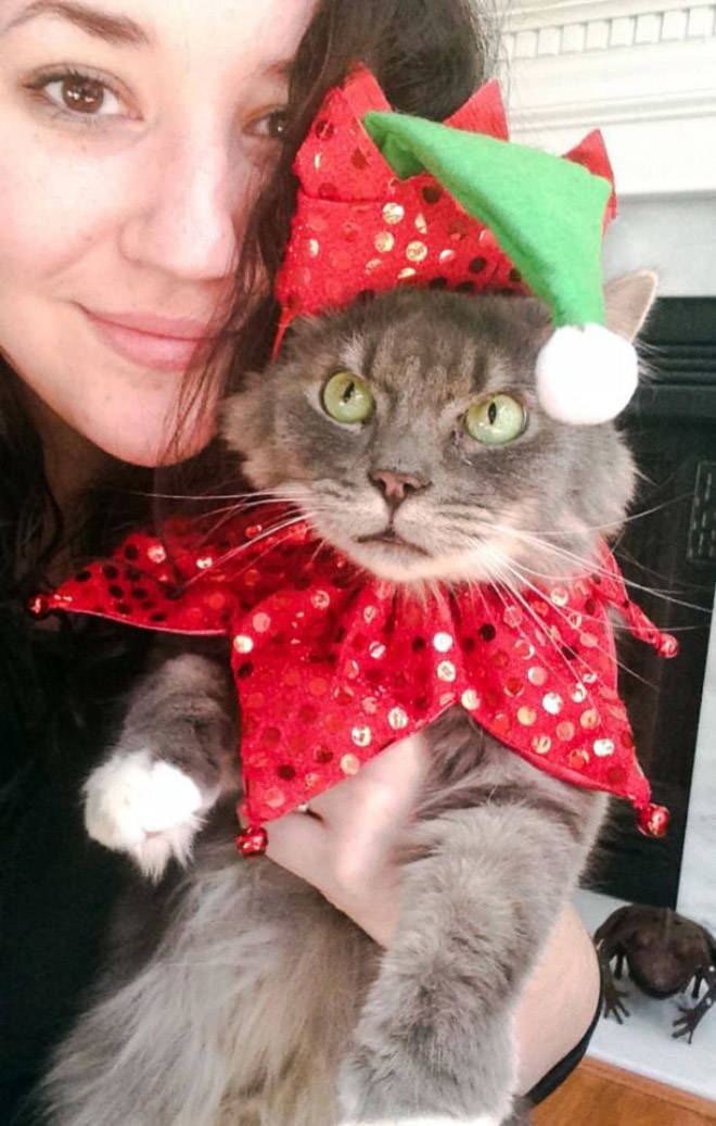 these_pets_are_fed_up_with_all_this_christmas_stuff_640_high_15