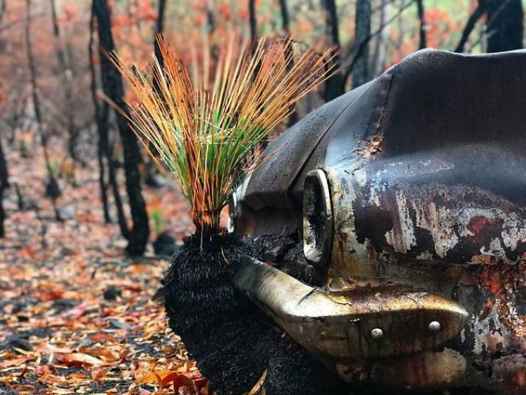photos_of_australia_coming_back_to_life_after_the_bushfire_catastrophe_640_01
