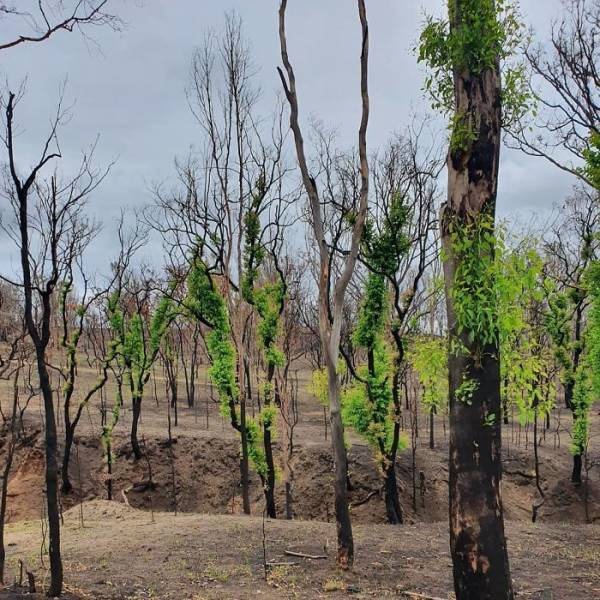 photos_of_australia_coming_back_to_life_after_the_bushfire_catastrophe_640_04