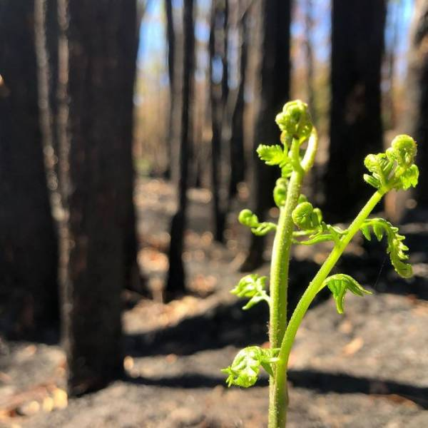 photos_of_australia_coming_back_to_life_after_the_bushfire_catastrophe_640_05
