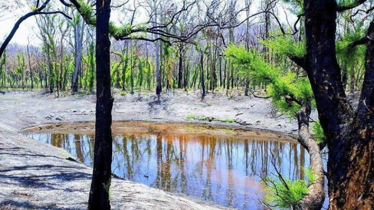 photos_of_australia_coming_back_to_life_after_the_bushfire_catastrophe_640_10