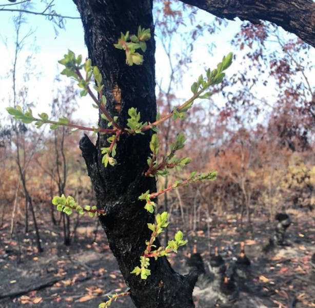 photos_of_australia_coming_back_to_life_after_the_bushfire_catastrophe_640_12