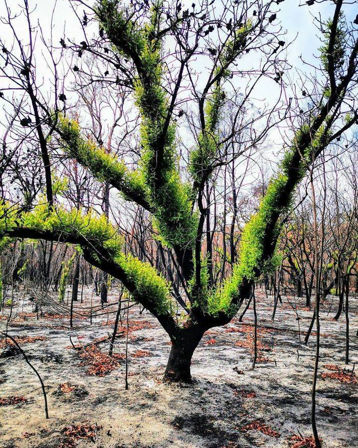 photos_of_australia_coming_back_to_life_after_the_bushfire_catastrophe_640_high_06