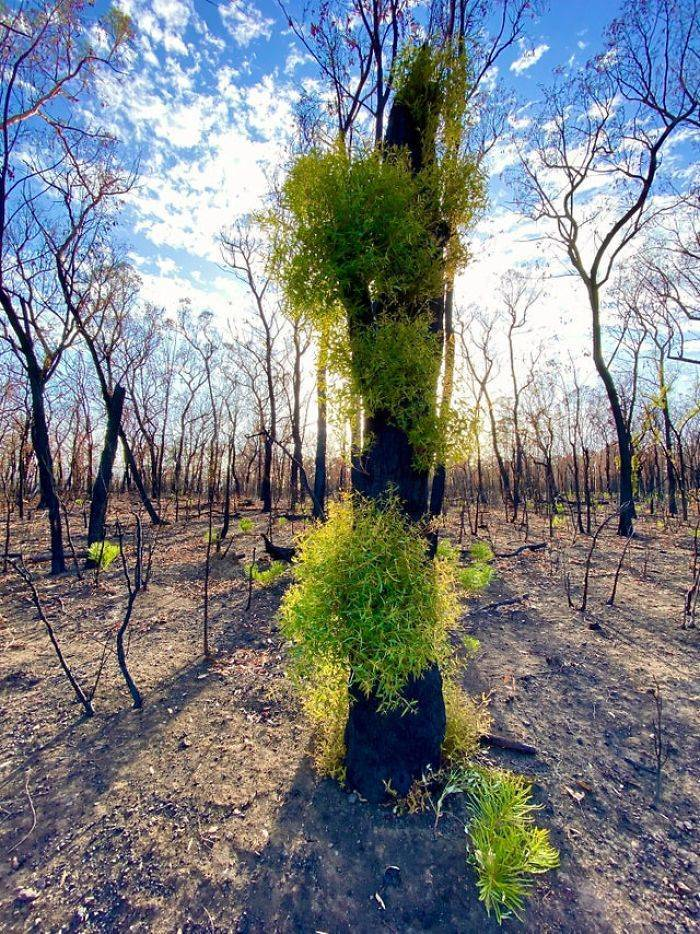 photos_of_australia_coming_back_to_life_after_the_bushfire_catastrophe_640_high_11