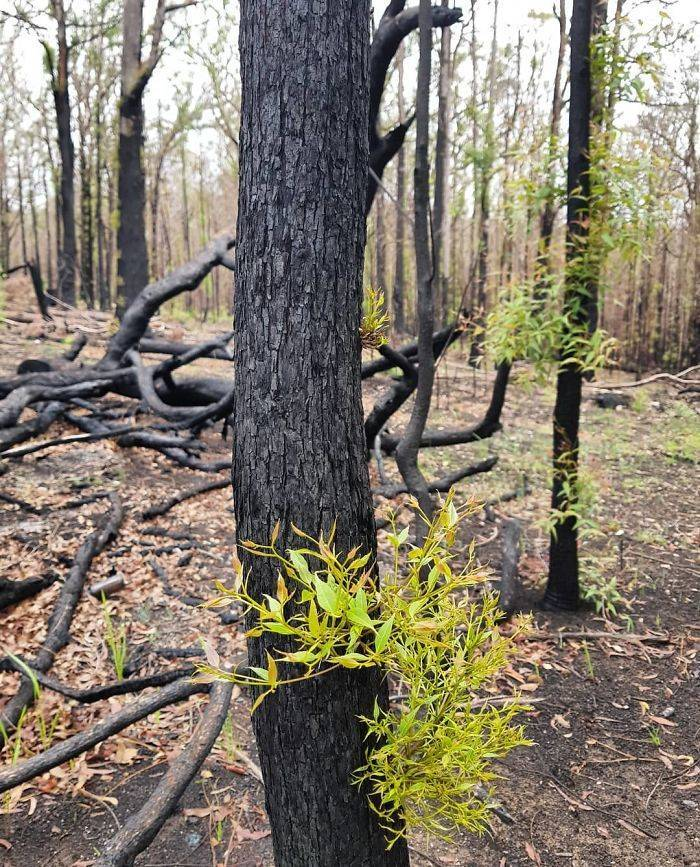 photos_of_australia_coming_back_to_life_after_the_bushfire_catastrophe_640_high_14