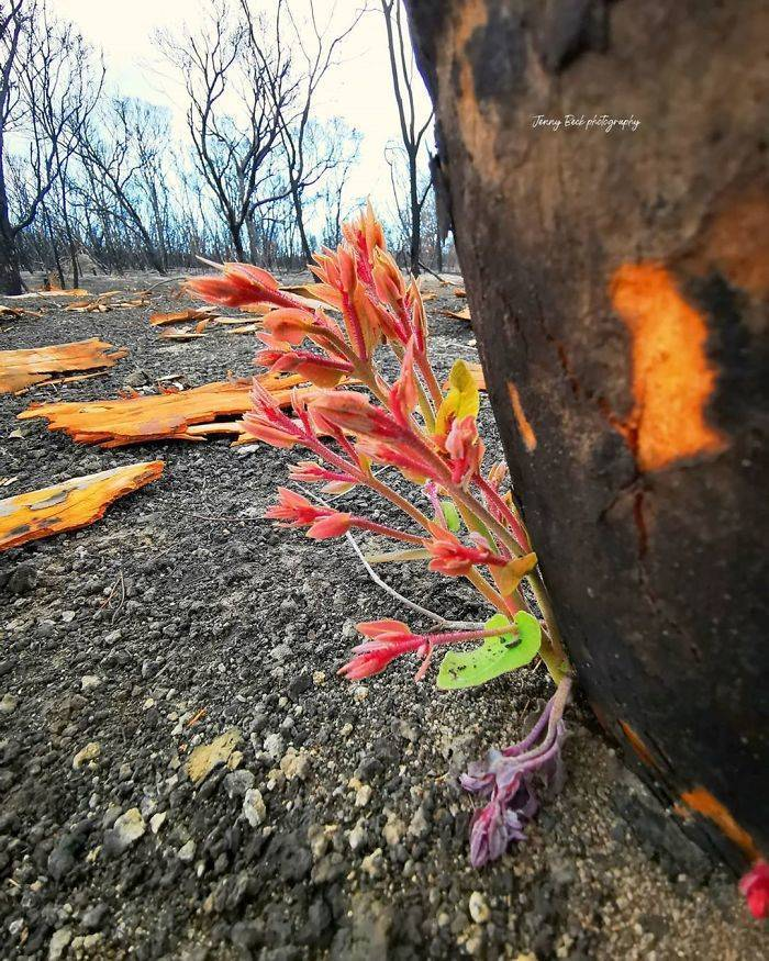 photos_of_australia_coming_back_to_life_after_the_bushfire_catastrophe_640_high_17