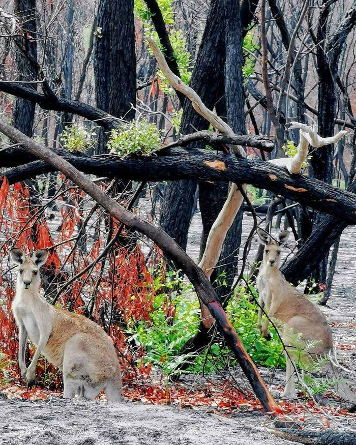 photos_of_australia_coming_back_to_life_after_the_bushfire_catastrophe_640_high_26